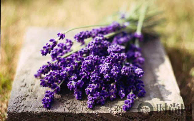 6907046-macro-flowers-lavender-purple